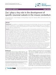 PDF - Neural Development