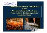 Vortrag 3 Anbindung Der Nidda An Main Und Rhein