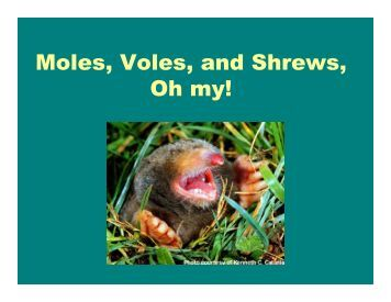 M l V l d Sh Moles, Voles, and Shrews, Oh my!