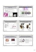 Aktuelle Therapiestrategien bei Patienten mit multiplem Myelom - Seite 5