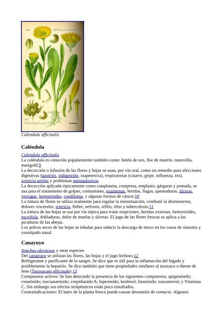cola de caballo planta medicinal wikipedia