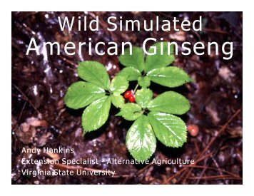 Ginseng Test - Gloucester County Virginia
