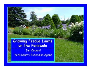 Growing Fescue Lawns on the Peninsula - Gloucester County Virginia