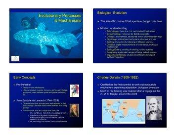 Evolutionary Processes & Mechanisms