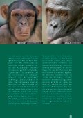 Bruder SchimpanSe SchweSter BonoBo - Giordano Bruno Stiftung - Seite 7