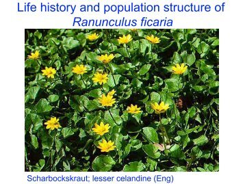 Life history and population structure of Ranunculus ficaria
