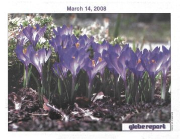 Glebe Report - Volume 38 Number 3 - March 14 2008