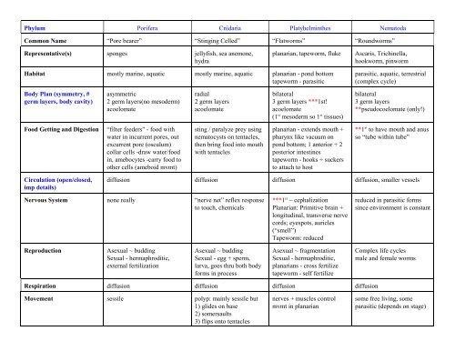 Porifera, cnidaria și platyhelminthes, SylvaticStone - Diferenta dintre noi