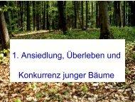 1. Ansiedlung, Überleben und Konkurrenz junger Bäume