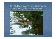 Vortrag 1_Biber_Saettele | PDF 11,4 MB