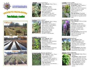 Chile Plantas Medicinales - Gran Fratervidad Tao Gnóstica Espiritual
