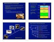 Mammal origins and evolution