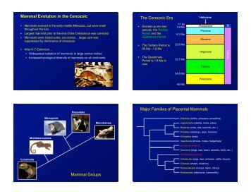 Mammal origins and evolution