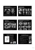 Procesos orbitarios - Geyseco - Page 5