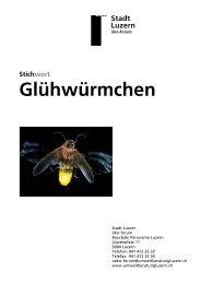 2004 Mitarbeit bei der Information - Glühwürmchen