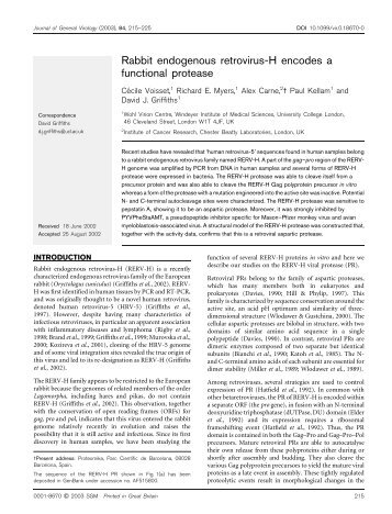 Rabbit endogenous retrovirus-H encodes a functional protease