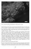 Candelariella boleana, a new epiphytic species from southern and ... - Page 3