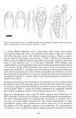 Candelariella boleana, a new epiphytic species from southern and ... - Page 4