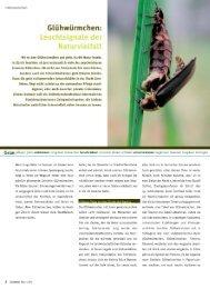 Grünzeit Artikel - Glühwürmchen