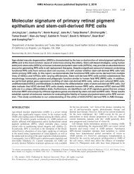 Molecular signature of primary retinal pigment epithelium and stem ...