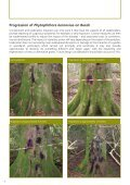 Phytophthora ramorum - The Food and Environment Research ... - Page 6