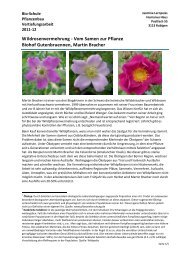 GlockenblumeHeimische Wiesenblume2000 Korn SaatgutCampanula patula
