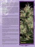 THCene: Strains - Alpine Seeds - Seite 3