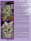 THCene: Strains - Alpine Seeds - Seite 5