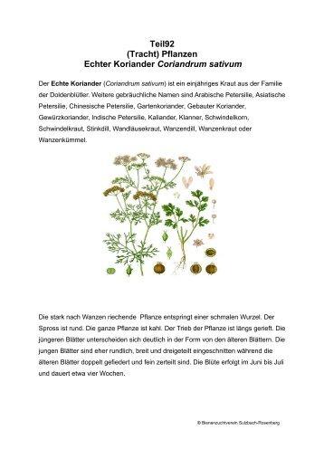 Teil92 (Tracht) Pflanzen Echter Koriander Coriandrum sativum