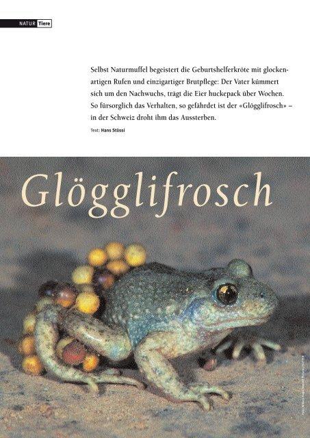 18-21 Gloegglifrosch - Natürlich