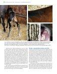 $ER 3TUNDEN (ENGSTFOHLEN U - Peter Richterich - Page 3