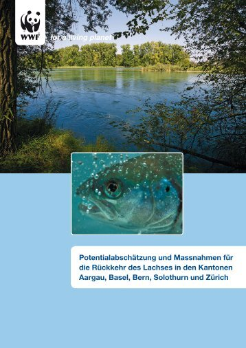 Lachs - WWF Schweiz