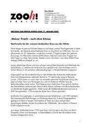 'Weisse' Pracht – auch ohne Schnee - Zoo Zürich