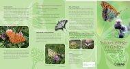 Schmetterlinge-Flyer.pdf - BUND Kreisgruppe Mainz-Bingen ...