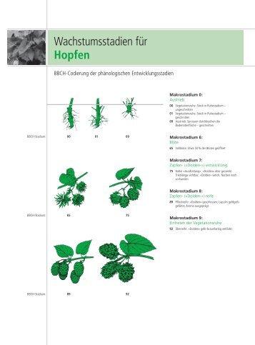Pflanzenschutz Hopfen - Beiselen