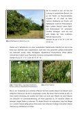 Die Gerlinger Heide – Bestimmung des Lebensraums ... - Page 5