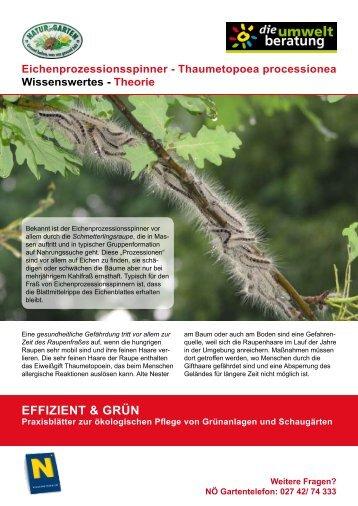 Eichenprozessionsspinner - Natur im Garten