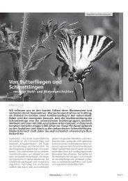 Von Butterfliegen und Schmettlingen … ein paar Wald