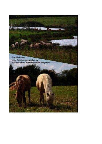 Die Facharbeit von Monika Hollmann können Sie hier als pdf ... - ifT