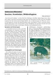 Seuchen, Krankheiten, Wildbrethygiene - Bayern
