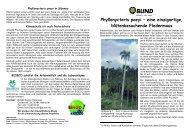 Phyllonycteris poeyi - BUND Kreisgruppe Region Hannover