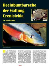 Hechtbuntbarsche der Gattung Crenicichla - Das Aquatarium