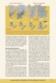 Download-PDF - Fossilien - Seite 3
