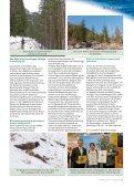 Baum des Jahres - Steiermärkische Landesforste - Seite 2
