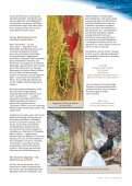 Baum des Jahres - Steiermärkische Landesforste - Seite 4