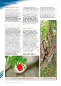 Baum des Jahres - Steiermärkische Landesforste - Seite 5