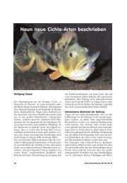 Neun neue Cichla-Arten beschrieben