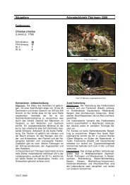 Artensteckbrief_Cricetus cricetus_250209