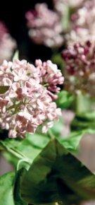 Garten Eden – Blütenträume aus Porzellan - Meissen - Seite 2