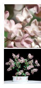 Garten Eden – Blütenträume aus Porzellan - Meissen - Seite 6